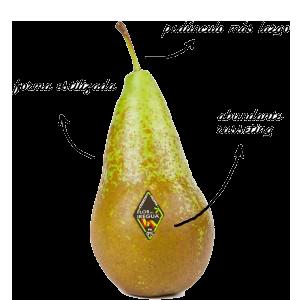 pera-descrita